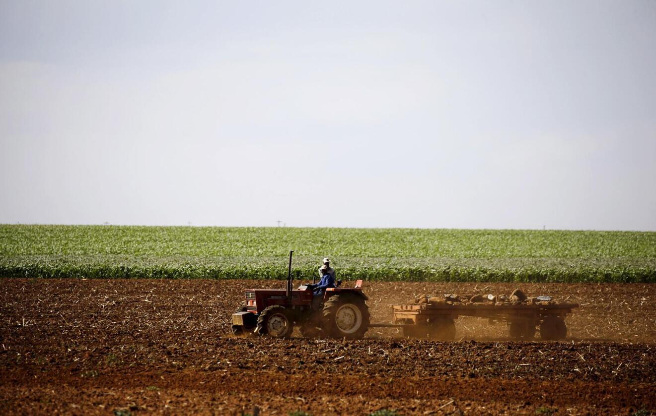 Erosjon: Konsekvensene av et ødelagt jordsmonn, kan bli enorme. Rapportskriverne skisserer opp sult og sviktende avlinger som mulige konsekvenser. Her fra Sør-Afrika.Foto: REUTERS/Siphiwe Sibeko/NTB SCANPIX