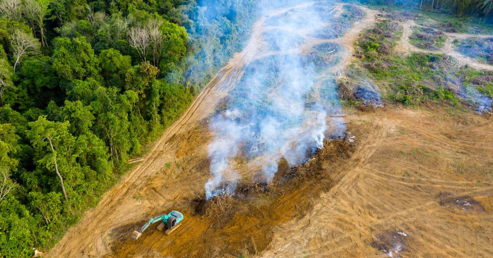 Den danske importen av soya legger ifølge landbrugsavisen.dk beslag på 600 000 hektar jord i Syd-Amerika. Det tilsvarer et område to ganger så stort som Fyns areal. Illustrasjonsfoto: Shutterstock/Richard Whitcombe