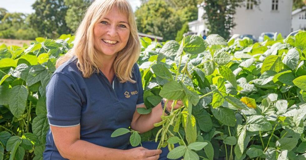 De siste tre årene har forsker Ingunn Vågen testet ut produksjon av edamamebønner (soya) på NIBIOs forskningsstasjon Landvik i Grimstad. I år har hun også et testfelt på Ås, i samarbeid med NMBU. Foto: Anette Tjomsland.