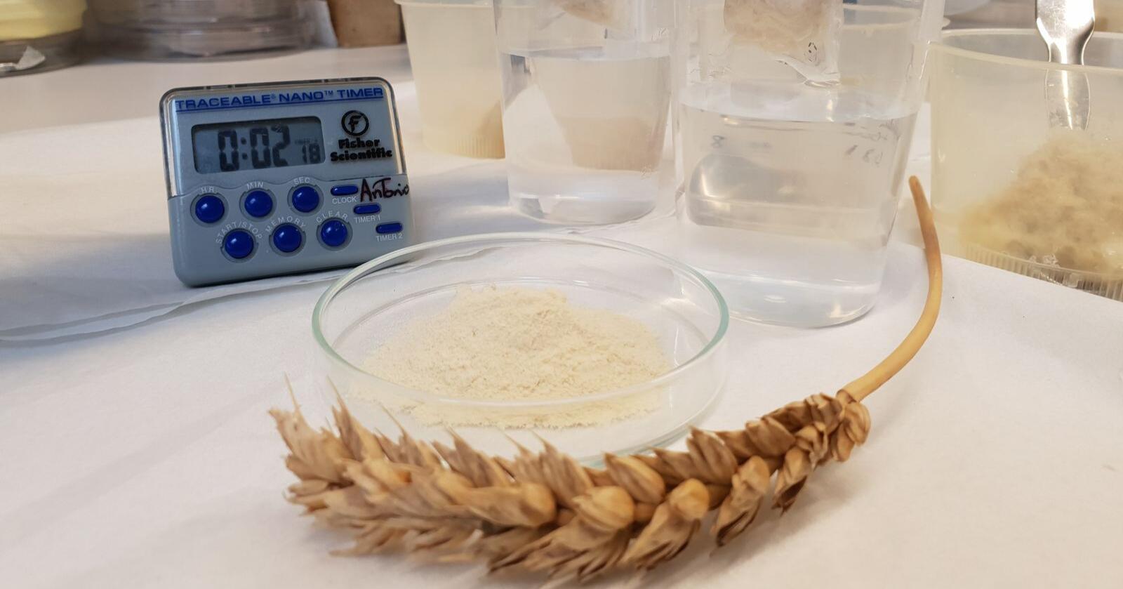 Bleier trenger noe som absorberer fukt godt, og nå er biologisk nedbrytbare superabsorbenter basert på både hvetegluten og potetprotein utviklet av forskere ved Sveriges lantbruksuniversitet (SLU) og Kungliga Tekniska högskolan (KTH) .Foto: Antonio Capezza, KTH