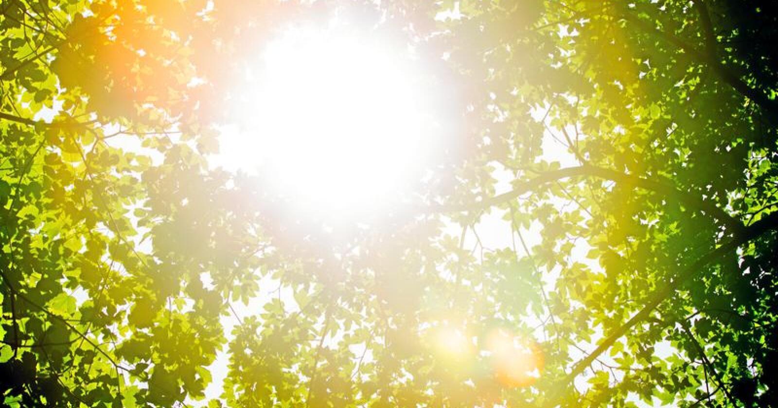 Livgivende: Sol og planter. Samspillet i naturen er så omfattende at det er vanskelig å ta inn over seg. Foto: Vegard Wivestad Grøtt / NTB scanpix