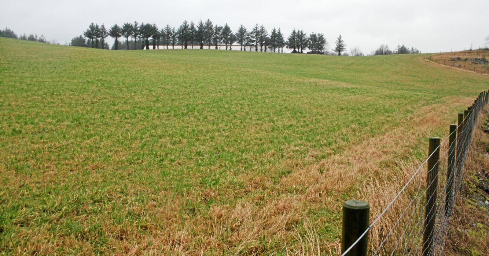 """Nedbygging: """"NK2"""", en del av  jordbruksområdet i Time på Jæren som er foreslått brukt til datasenter og annen kraftkrevande industri. Foto: Bjarne Bekkeheien Aase."""