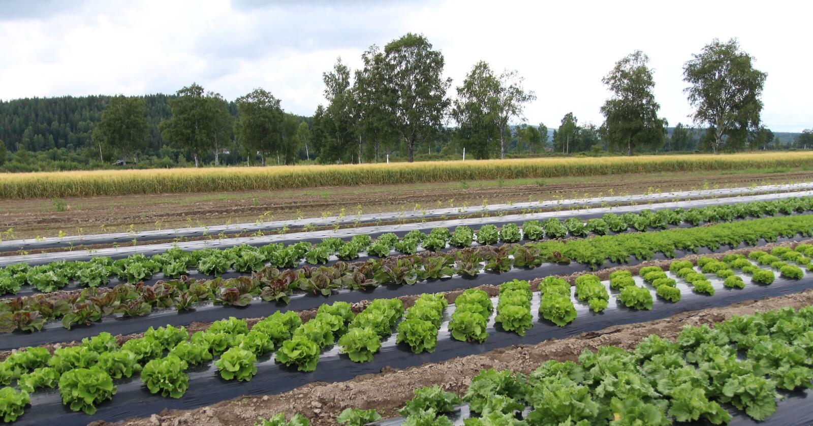 Rekord: Norske produsenter av frukt og grønt har aldri oppnådd høyere priser enn i 2020. (Foto: Kristin Bergo)