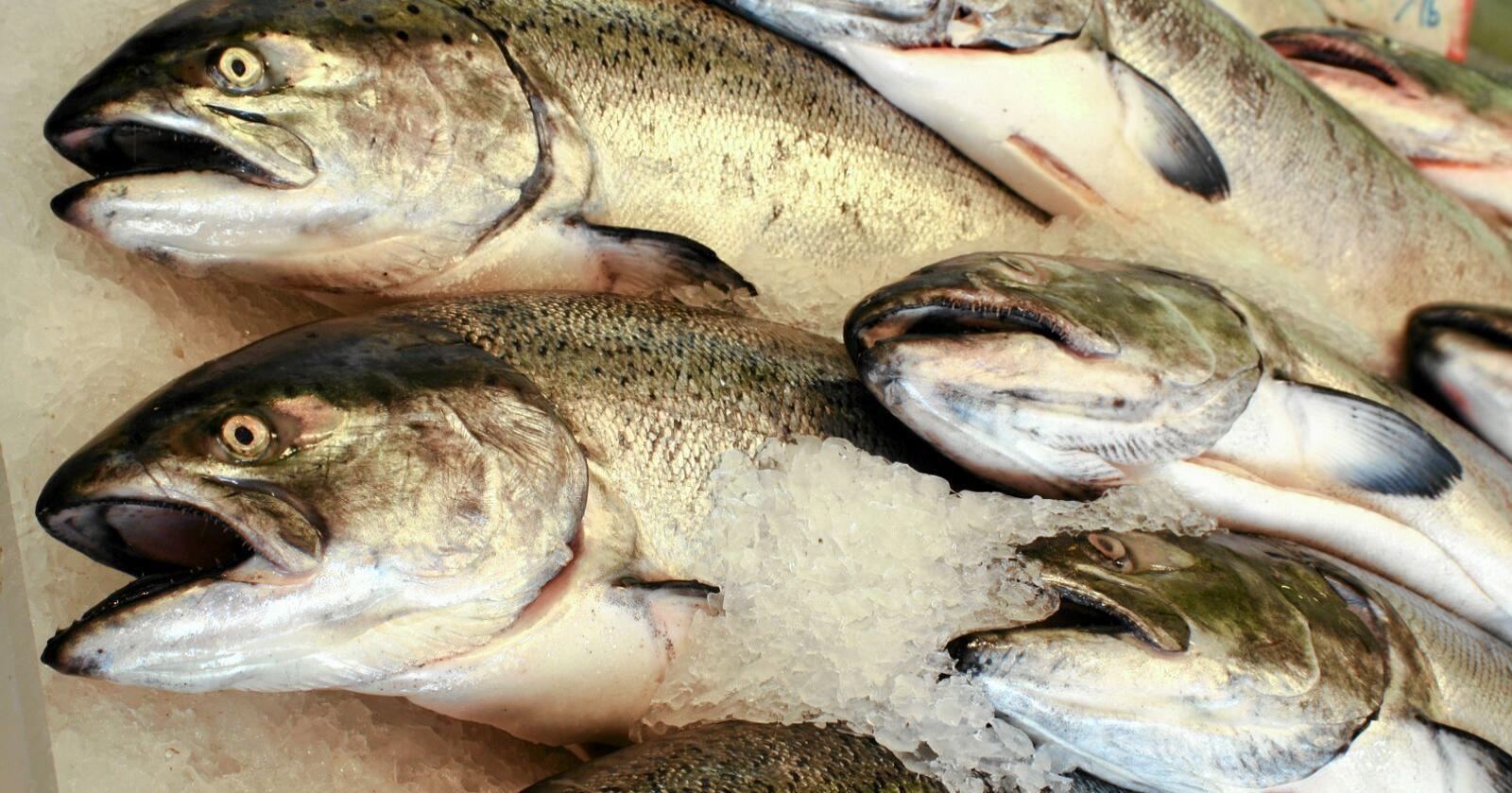 Tollvilkårenefor norsk eksport av sjømat villevært bedre med de handelsavtalene som Canada og Japan har med EU enn det som er dagens situasjon med EØS-avtalen, mener Kathrine Kleveland. Foto: Mostphotos