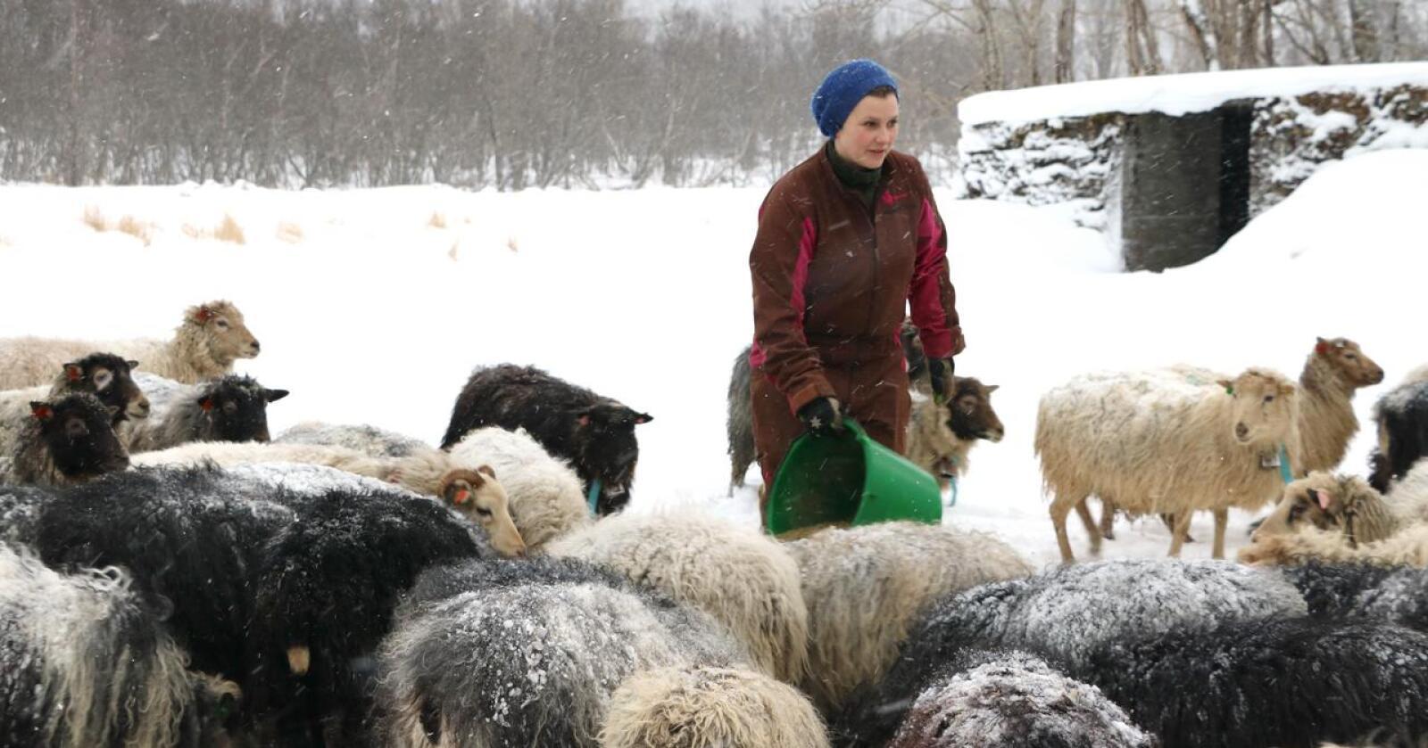 Økonomi: Det hjelper lite at inntektene øker, når utgiftene mangedobles, skriver Tone Rubach, leder i Troms Bondelag. (Foto: Liv-Karin Edvardsen)