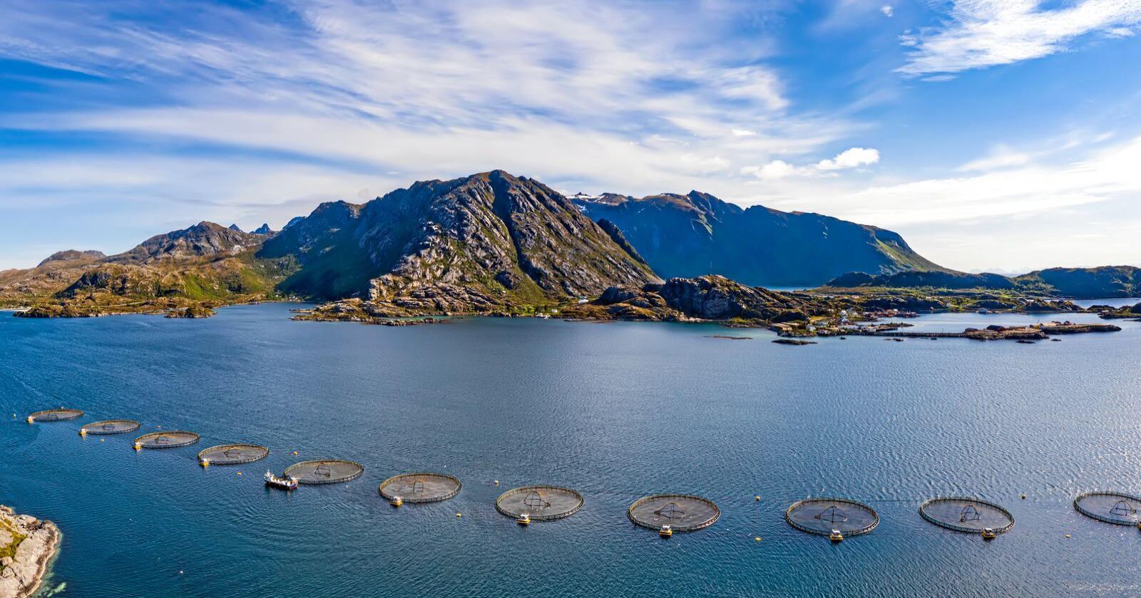 Kan flyttes: Det er ikke slik at norske fjorder er en forutsetning for produksjon av laks, skriver Henrik Wiedswang Horjen. Foto: Andrey Armyagov / Mostphotos