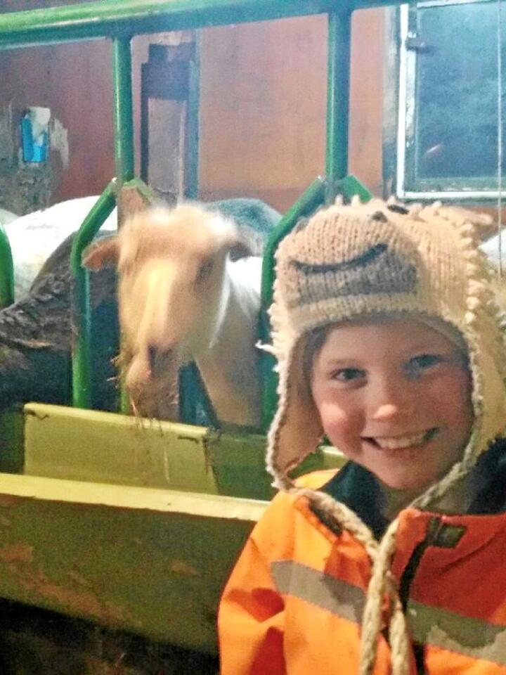 Emil Frøland (10) er sauebonde på fjerde året. Her er han saman med Roseg (t.v.), Pepper, Lamboline, Koseklumpen, Flekken og Bonnie. Foto: Privat