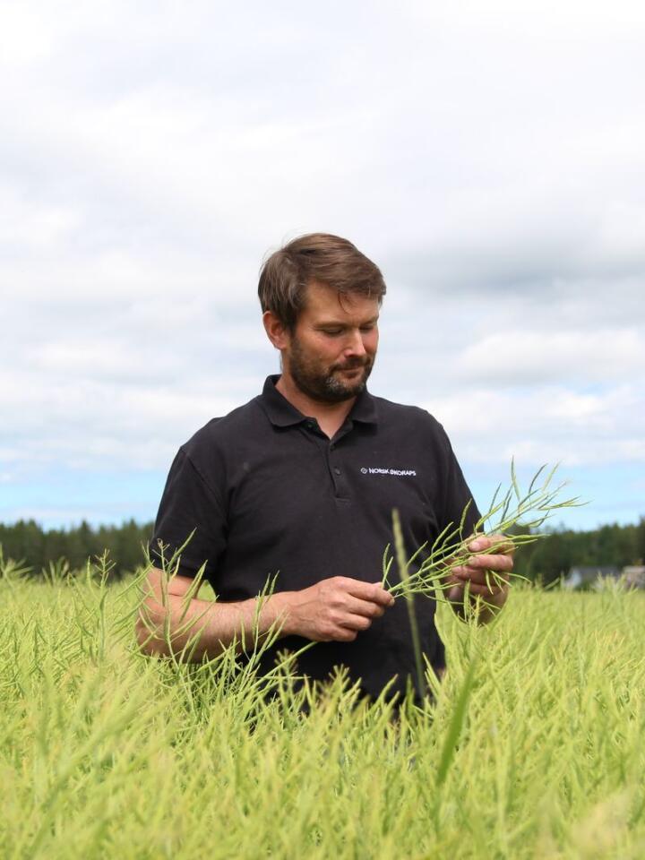 DE TRE GODE: Økobonde Thorbjørn Lund fra Rakkestad har fire ulike veksttyper i et seksårig vekstskifte. Med «de tre gode forgrødene» raps, åkerbønner og eng, sørger han for å binde nitrogen i jorda, at jordstrukturen er optimal og redusere ugraspresset.