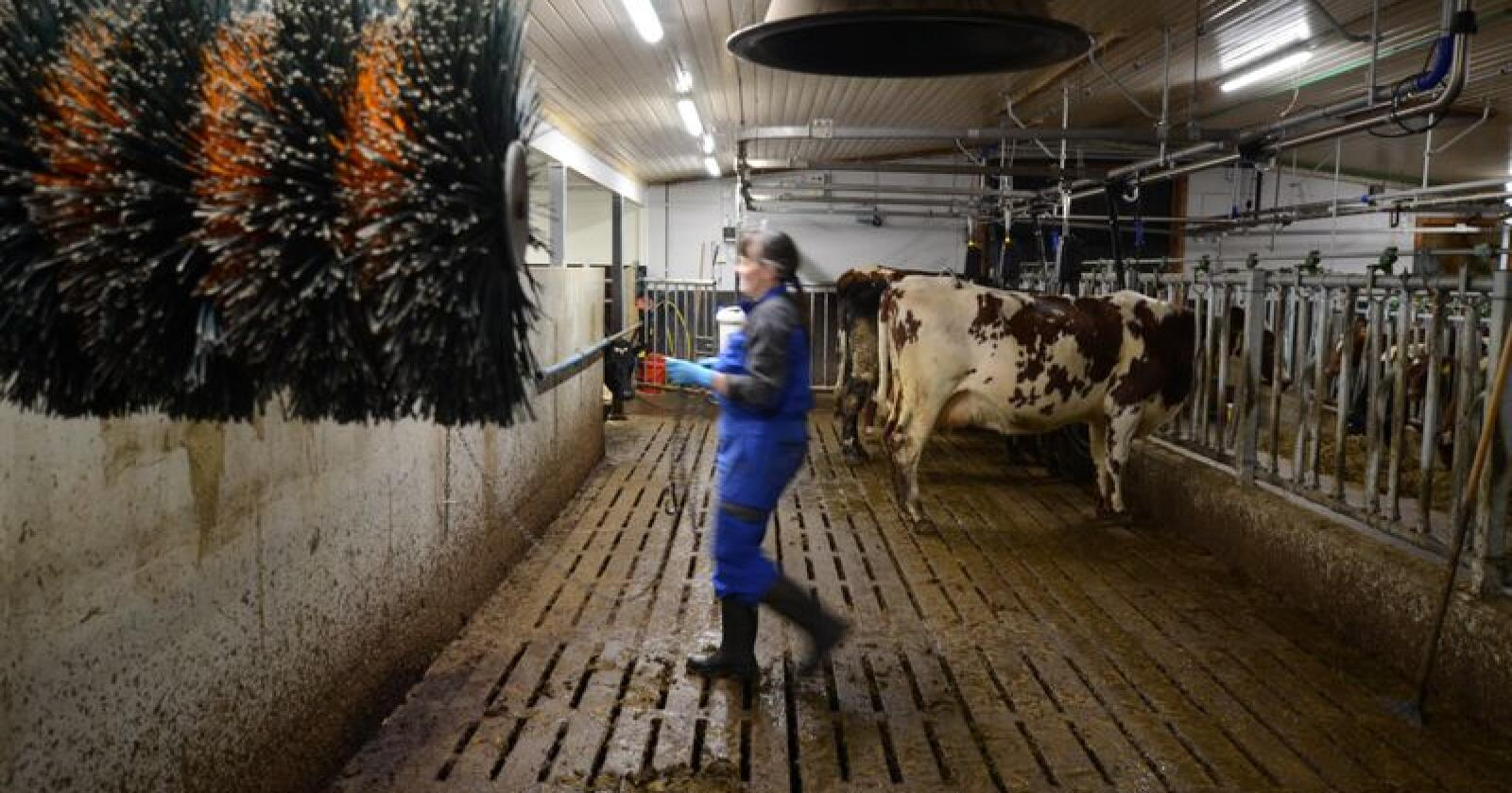 Hedmark, Rogaland og Agder tilbys best pris av alle kvoteregioner, når den ekstraordinære oppkjøpsordningen settes i gang fra nyttår. Illustrasjonsfoto: Liv Jorunn Denstadli Sagmo