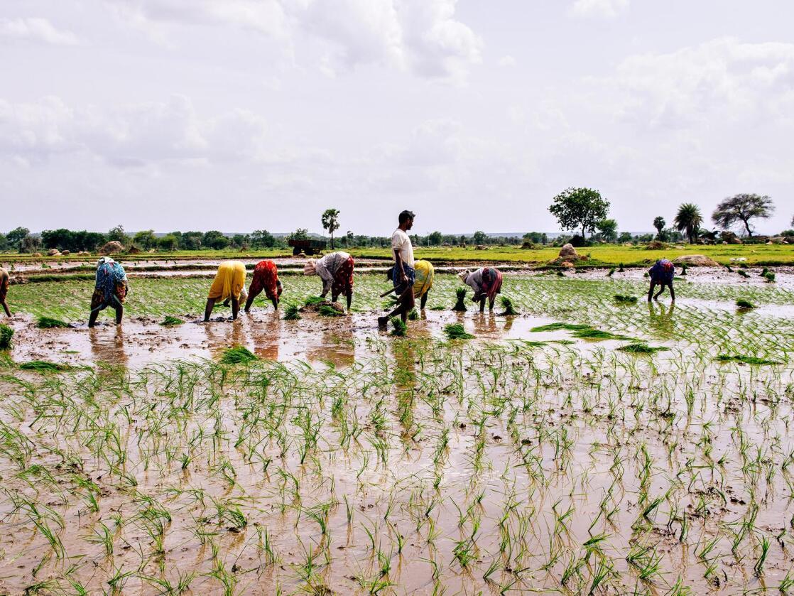 Rettighet: Biraj Patnaik har kjempet for å gjøre retten til mat til en grunnleggende rett i India. Det førte fram. Men fortsatt er underernæring et gigantisk problem i det folkerike landet.  (Foto: Ragnar Vaaga Pedersen)