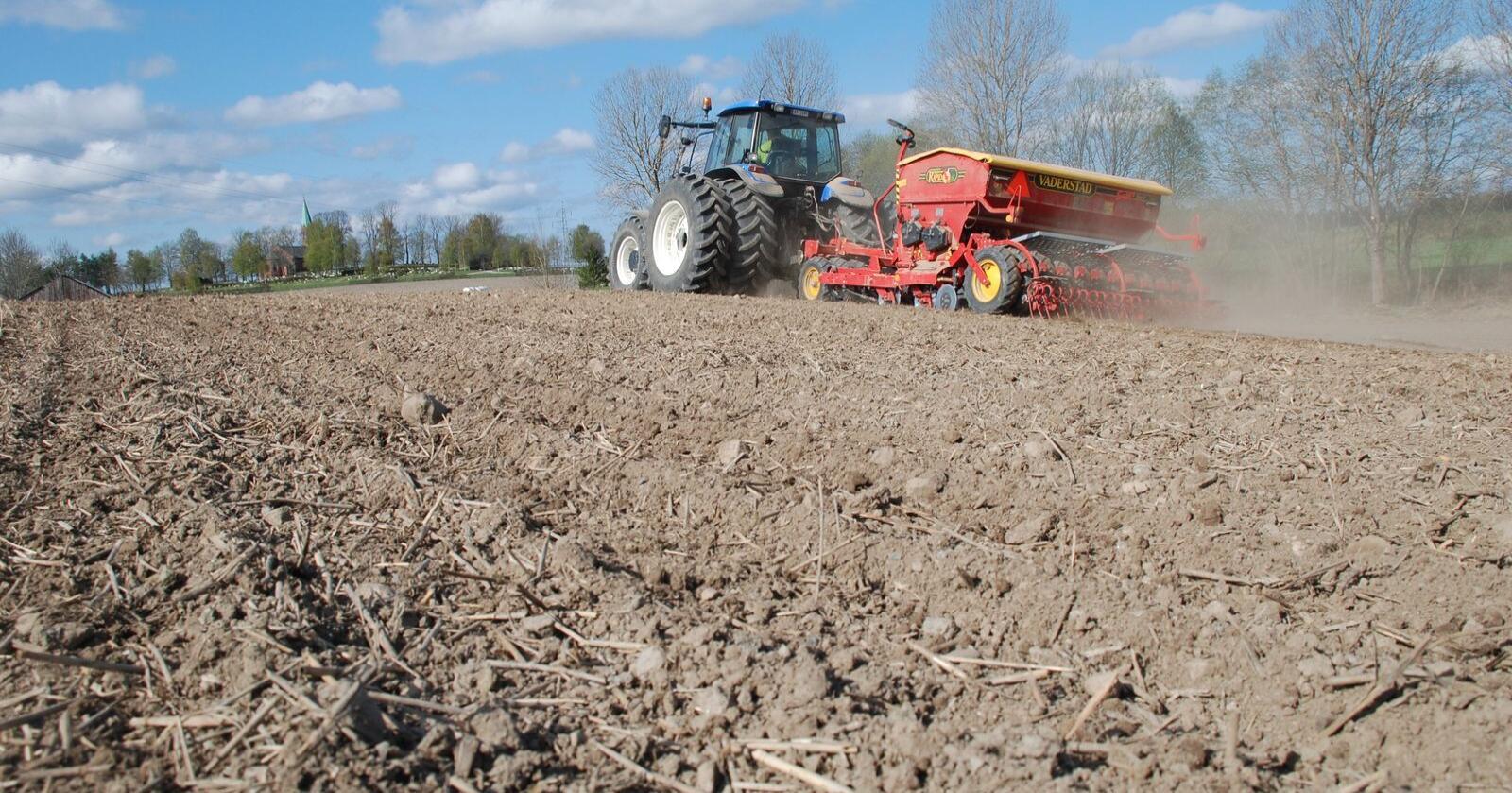 Hvete: Salget av såkorn viser at det blir et betydelig hveteareal i år, men det er et spenningsmoment hvor mye som blir av matkvalitet. (Foto: Karl Erik Berge)