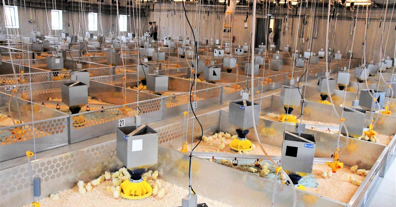 I hovedavdelingen på Fjørforsk er det plass til 6000 slaktekyllinger. Bygget har også mindre avdelinger hvor det kan tilrettelegges for verpehøns. Foto: Kai Ole Hänsch