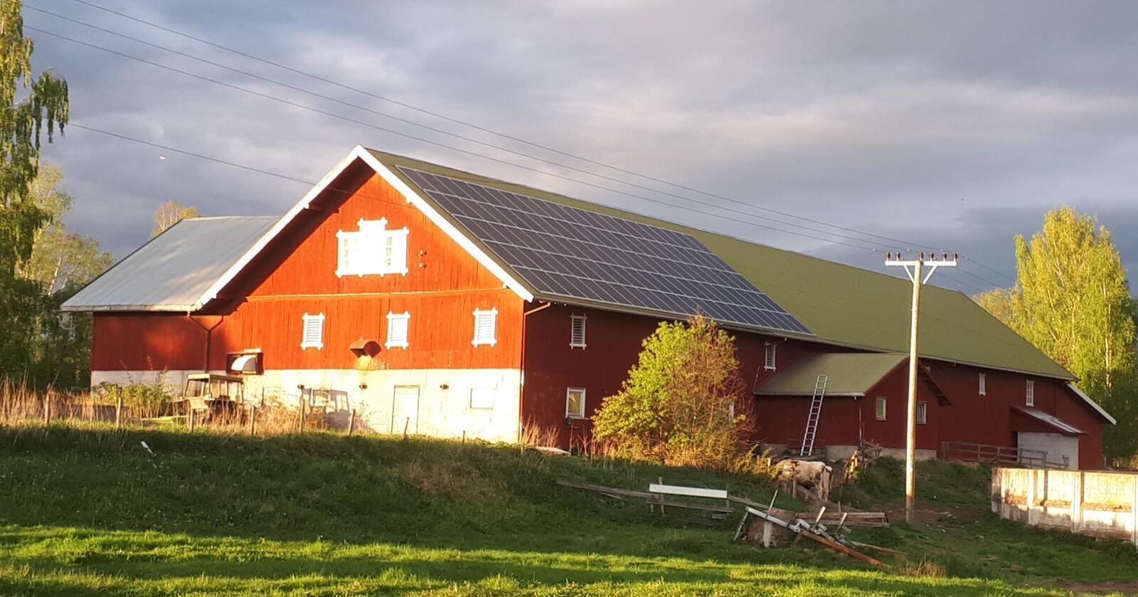 Nå kan NLR hjelpe deg med å se på aktuelle klimatiltak spesielt tilpasset din produksjon. Foto: Karl Daniel Ekker