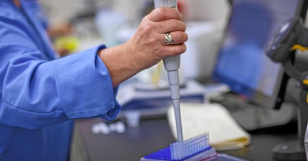 Pipettering: Oksesæd fylles i strå på ABS-laboratoriene. Bildet er et pressebilde – fotografer utenfra er forbudt i laboratoriet. Foto: ABS