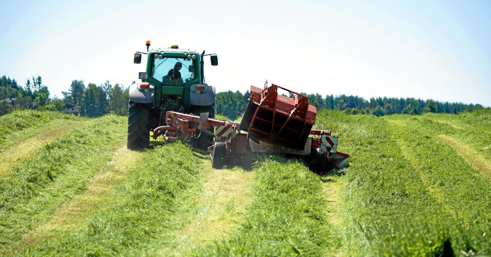 Skvises: Kan grasdyrking på kornjord (her i Akershus) få null tilskudd samtidig som gras i brattlendet like ved får fullt tilskudd? Ja, ifølge Nibio. Foto: Erling Fløistad