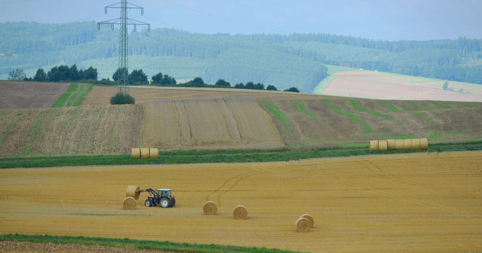 Frankrikes landbruksminister ber folk som ikke kan gå på jobb for tiden om å stille som sesongarbeidere i landbruket. Illustrasjonsfoto: Frank May / NTB scanpix