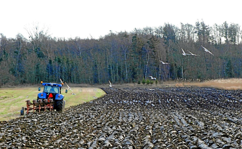 Plogen som skulle hjelpe oss å promotere de gode vekstene, bidrar sterkt til å redusere jordlivet. Livet under jordskorpa har vært underestimert både i konvensjonelt og økologisk landbruk, skriver Trond Ivar Qvale. Foto: Colourbox
