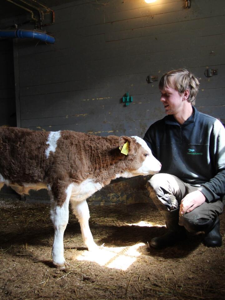 SIKKER: 23 år gamle Geirmund Grøndalen kunne ikke ta over gården kjapt nok og har store planer for drifta. Allerede ett år etter overtakelsen er han i gang med å regne på mulighetene for å bygge ut.