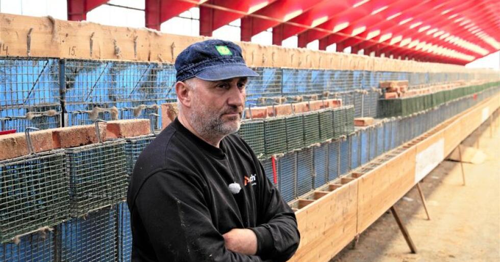 Minkbonden saksøker staten i håp om å få full erstatning når han må legge ned drifta. Foto: Håkon Vårhus Sagen/NRK Rogaland