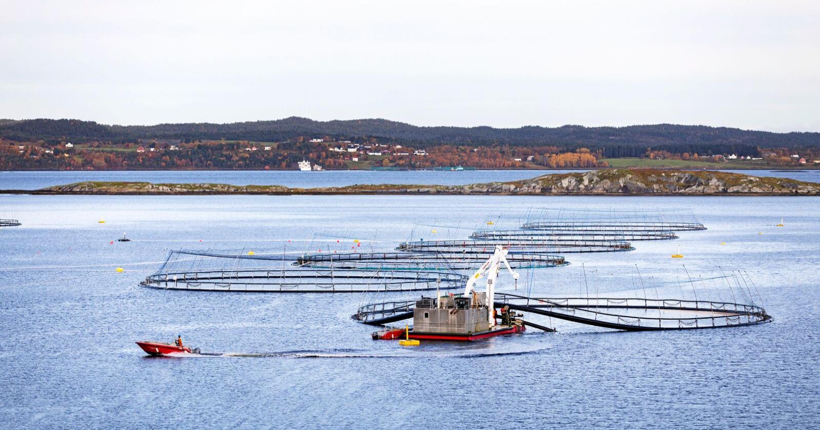 Lakseskatt: Naturgitte fortrinn for oppdrett gir havbruksnæringen en grunnrente. Foto: Gorm Kallestad/NTB scanpix