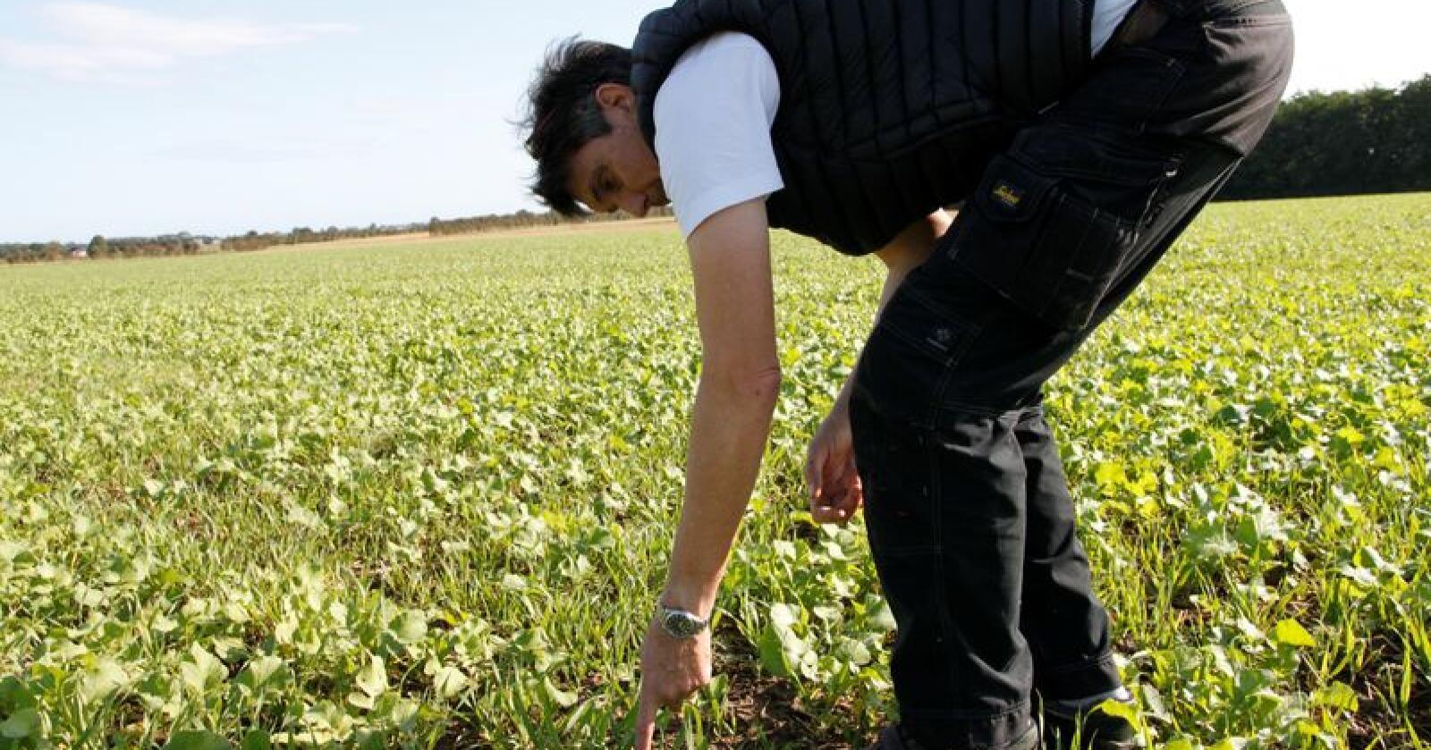 Hans Dahm er tidligere formann i foreningen for redusert jordbearbeiding i Danmark. Foto: Øystein Heggdal
