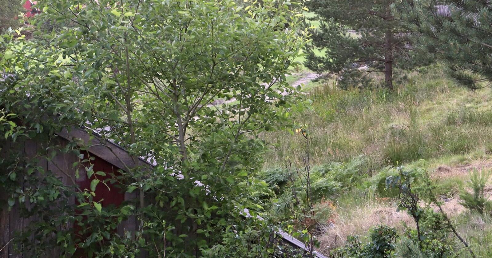 Slik Tilbakeblikk-serien viser, gror Norge igjen. Et eksempel på dette er her i Arendal i Agder. Foto: Oskar Puschmann, NIBIO.