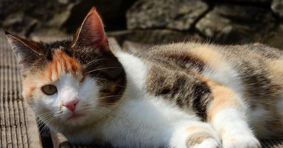 Både Mattilsynet og Dyrebeskyttelsen ble varslet, hvor sistnevnte valgte å anmelde mannen for brudd på dyrevelferdsloven. (Illustrasjonsfoto: Pixabay)