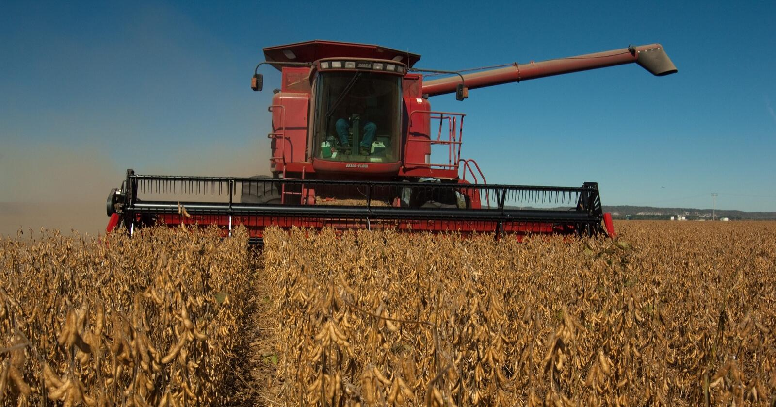 Høsting av soyabønnerSoyaFoto fra Wikimedia Commons