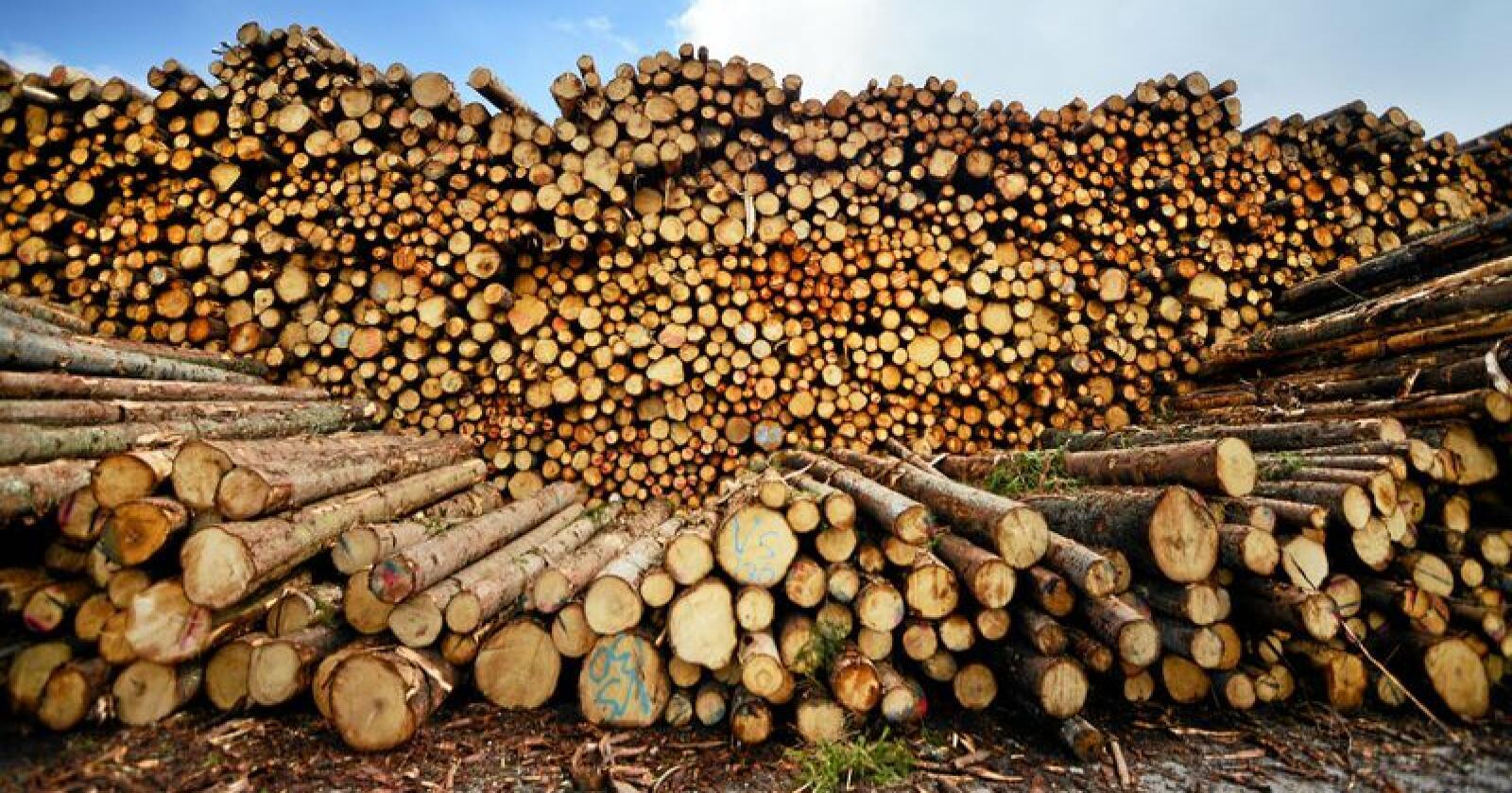 Skog kan brukes til å erstatte stål og betong som byggematerialer, i biodrivstoff og eller som råstoff i plast- og kjemikalieproduksjon. Foto: Siri Juell Rasmussen