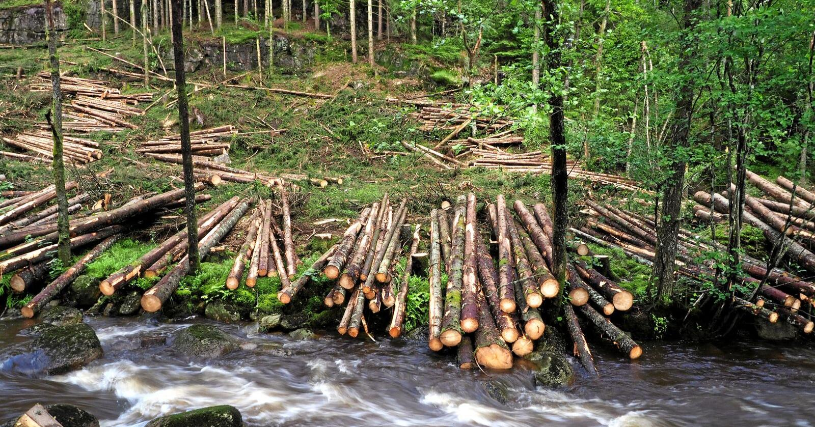 De med størst skog hadde også størst inntektsutvikling. Illustrasjonsfoto: Siri Juell Rasmussen
