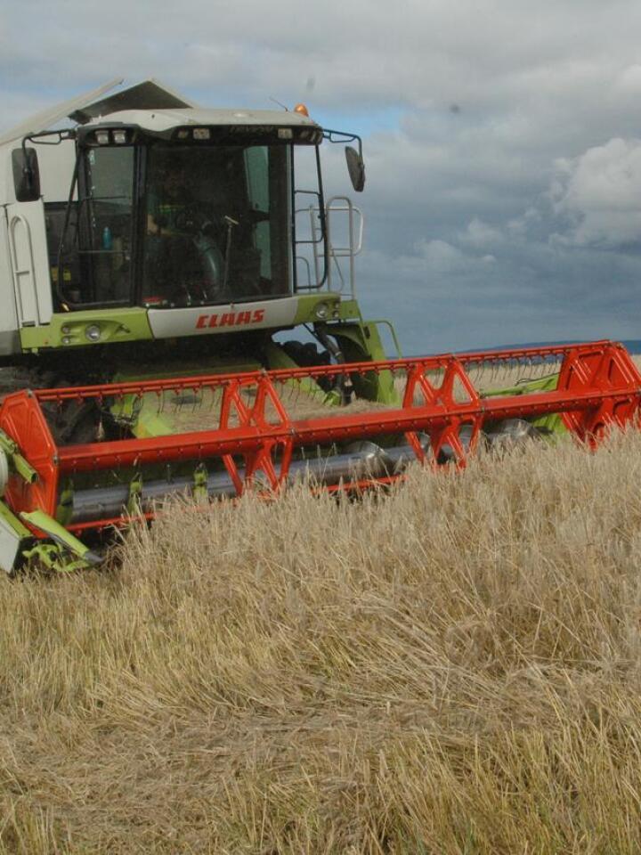 En årlig sortsframgang i perioden 1990 til 2010 på for hvete, bygg og havre på henholdsvis 3,5, 1,5, og 2,5 kg pr. dekar vil med dagens areal og kornpriser beløpe seg til omkring 20 millioner kroner årlig.