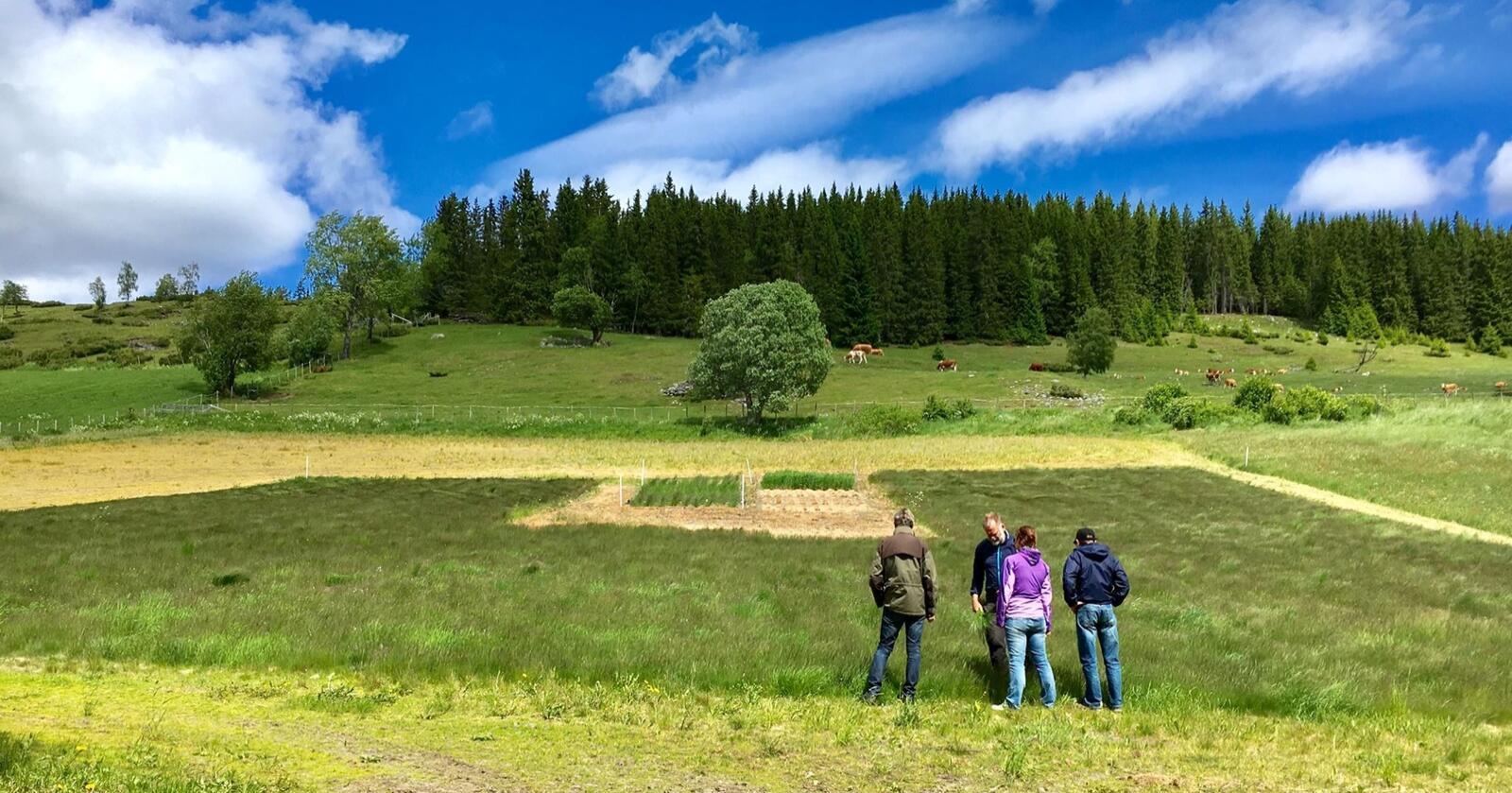 Prosessene i jordsmonnet (her fra plantetesting på Løken gård) holder karbon naturlig lenge under bakken. Foto: Graminor