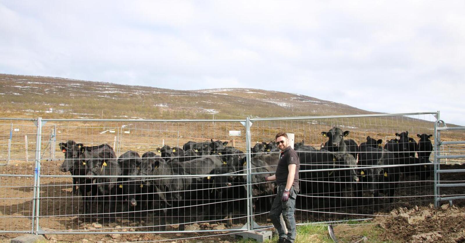 Kritisk: Her er det ingen melkebruk å være tilleggsnæring for. Ammeku er hovednæringen, skriver innsenderen. Foto: Privat