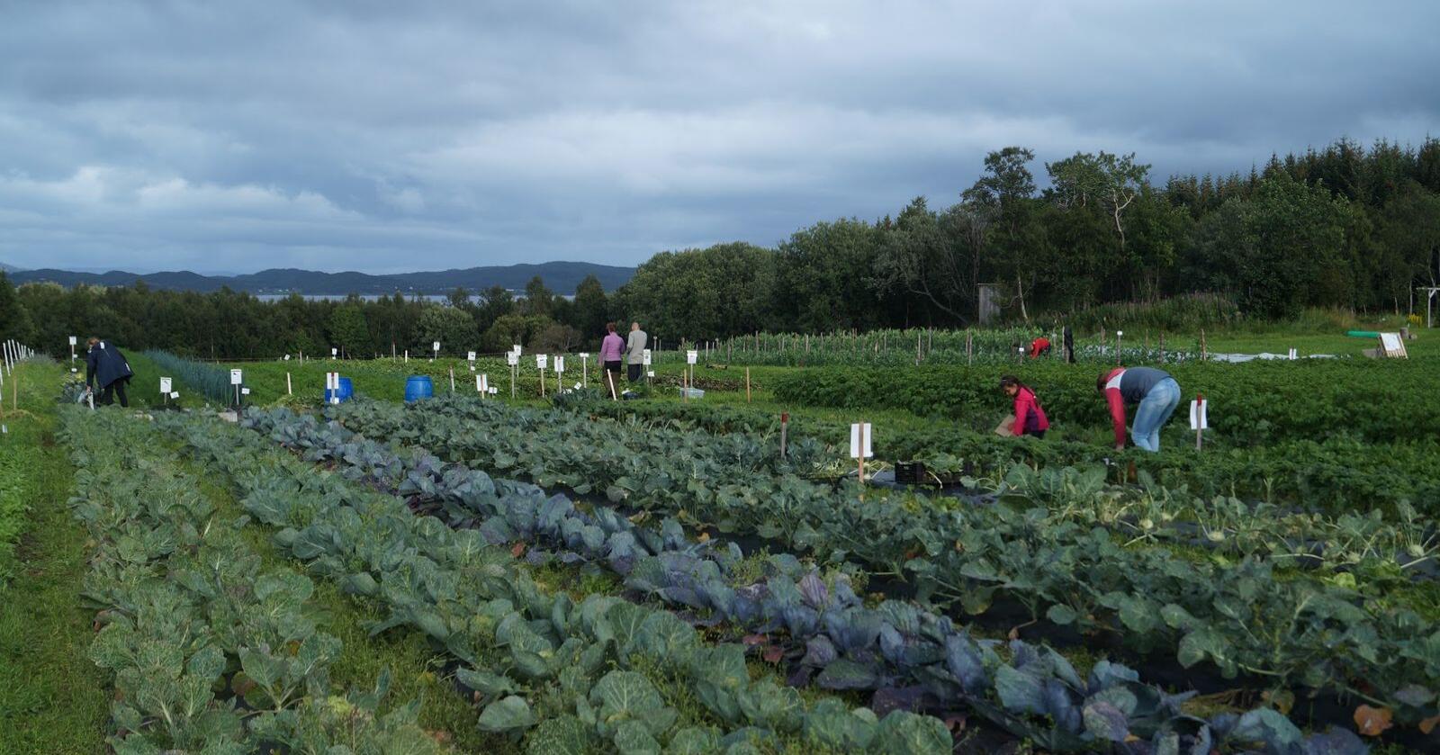 På grunn av korona-krisa kan norske bønder bli nødt til å få hjelp av norske sesongarbeidere dette året. Foto: Hilde Danielsen