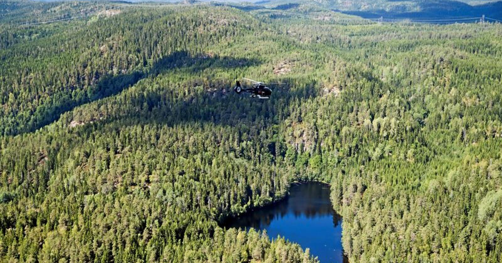 Tilvekst: Mykje av skogen veks betre enn før, men måling av produksjonsevna i gamal skog fører likevel til at den reelle produksjonsevna vert grovt undervurdert. Foto: Berit Roald/NTB scanpix