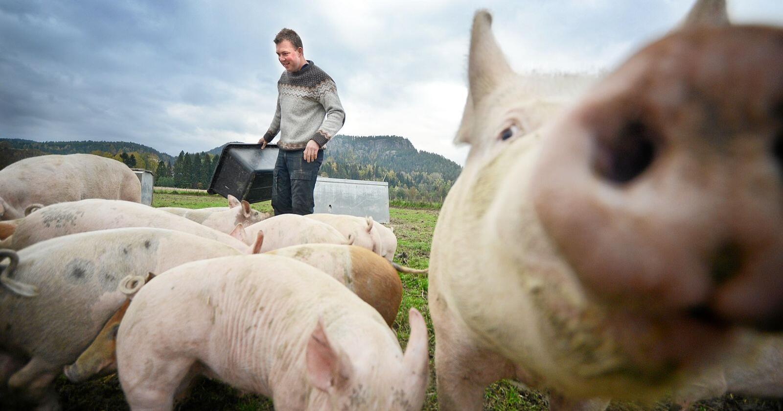 Dropp spøkelser og stråmenn, ta en sakligere tone overfor de mange som bare ønsker seg mer av det beste innen norsk landbruk, skriver Tore Jardar Wirgenes (bildet) og Tore Bergum. Foto: Siri Juell Rasmussen