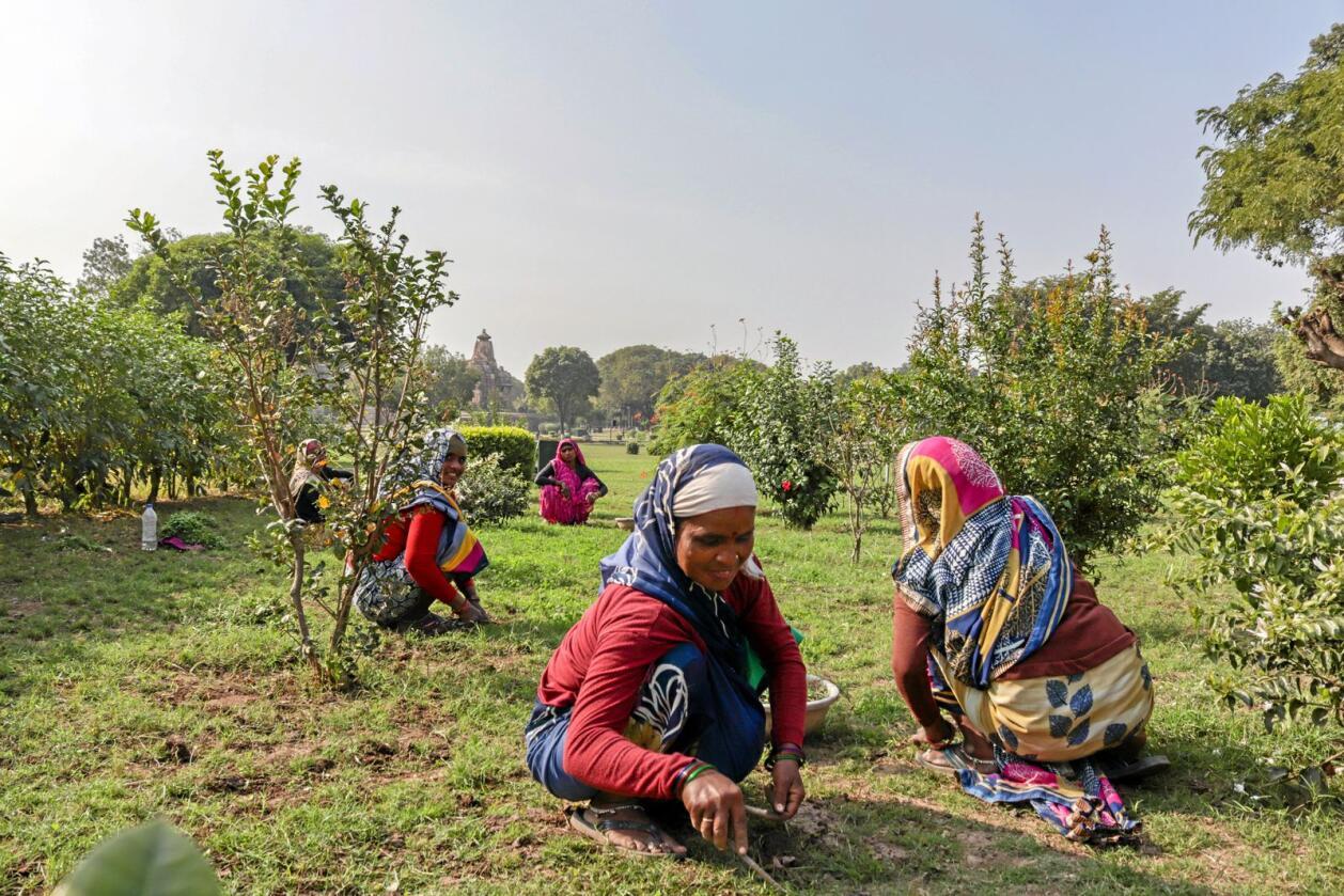 500 av 570 millioner gårdsbruk drives som familiebedrifter, og 40 prosent av verdens befolkning har dette som hovedinntektskilde, skriver innsenderne. Foto: Yogendra Singh / Mostphotos