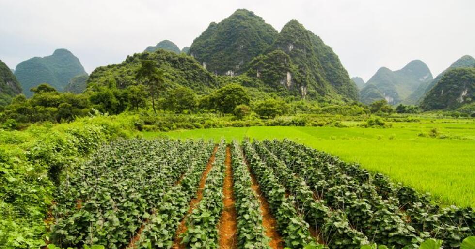 Den globale etterspørselen etter landbruksprodukter ventes å øke med 15 prosent det neste tiåret, mens produktivitetsveksten i landbruket globalt ventes å øke noe mer. Her sees landbruk i Karst-fjellene i Kina. Foto: Colourbox/Juhani Viitanen