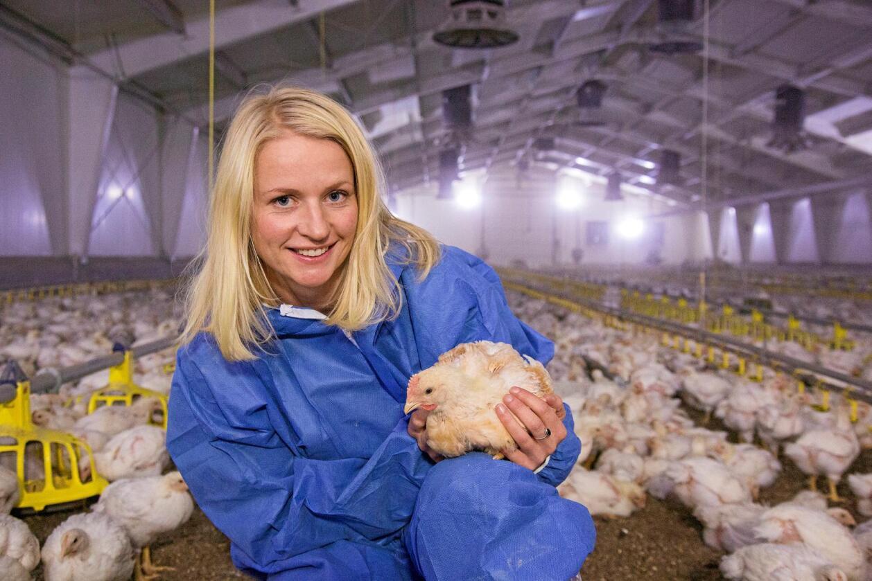 Dyrevernalliansens prosjektleder, veterinær Julie Grell, med en Hubbardkylling. Dyrevernalliansen har samarbeidet med Rema 1000 og Norsk Kylling i to år for å bedre dyrevelferden. Foto: Iselin Linstad Hauge/Dyrevernalliansen
