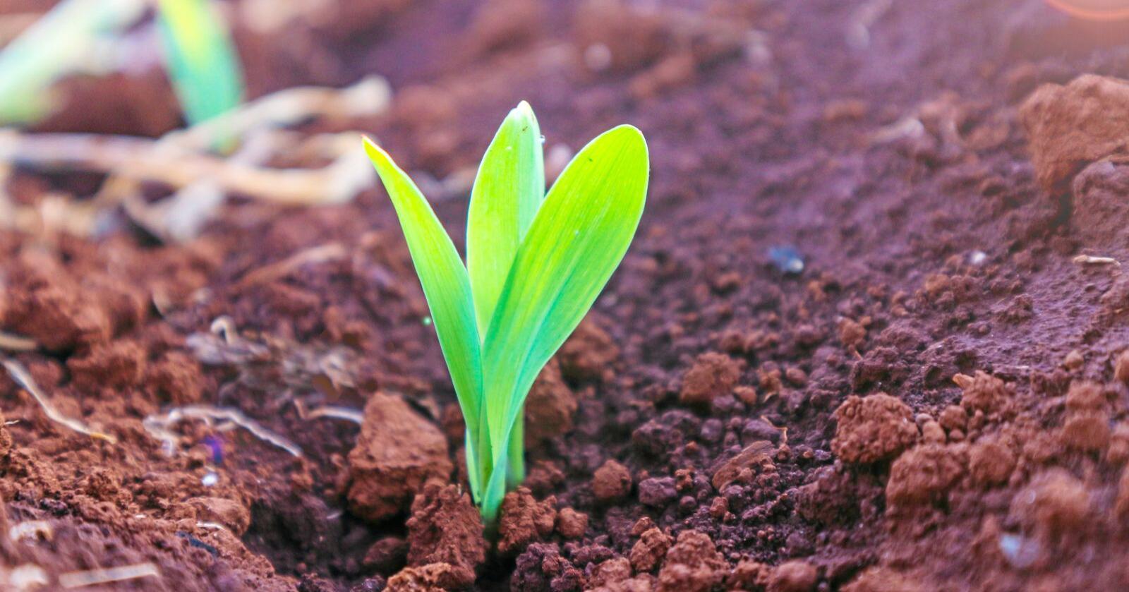 Avl har mennesker drevet med i flere tusen år, ofte på måter som naturen har tjent på. Å klippe og lime i DNA-et er noe helt annet. Foto: Mostphotos