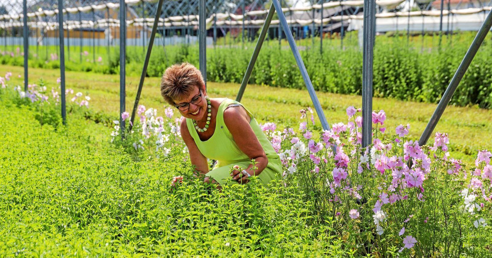 I urtehagen: Kathrine Kleveland blant krydderurter på Skjærgården Gartneri i Åsgårdstrand. Foto: Senterpartiet