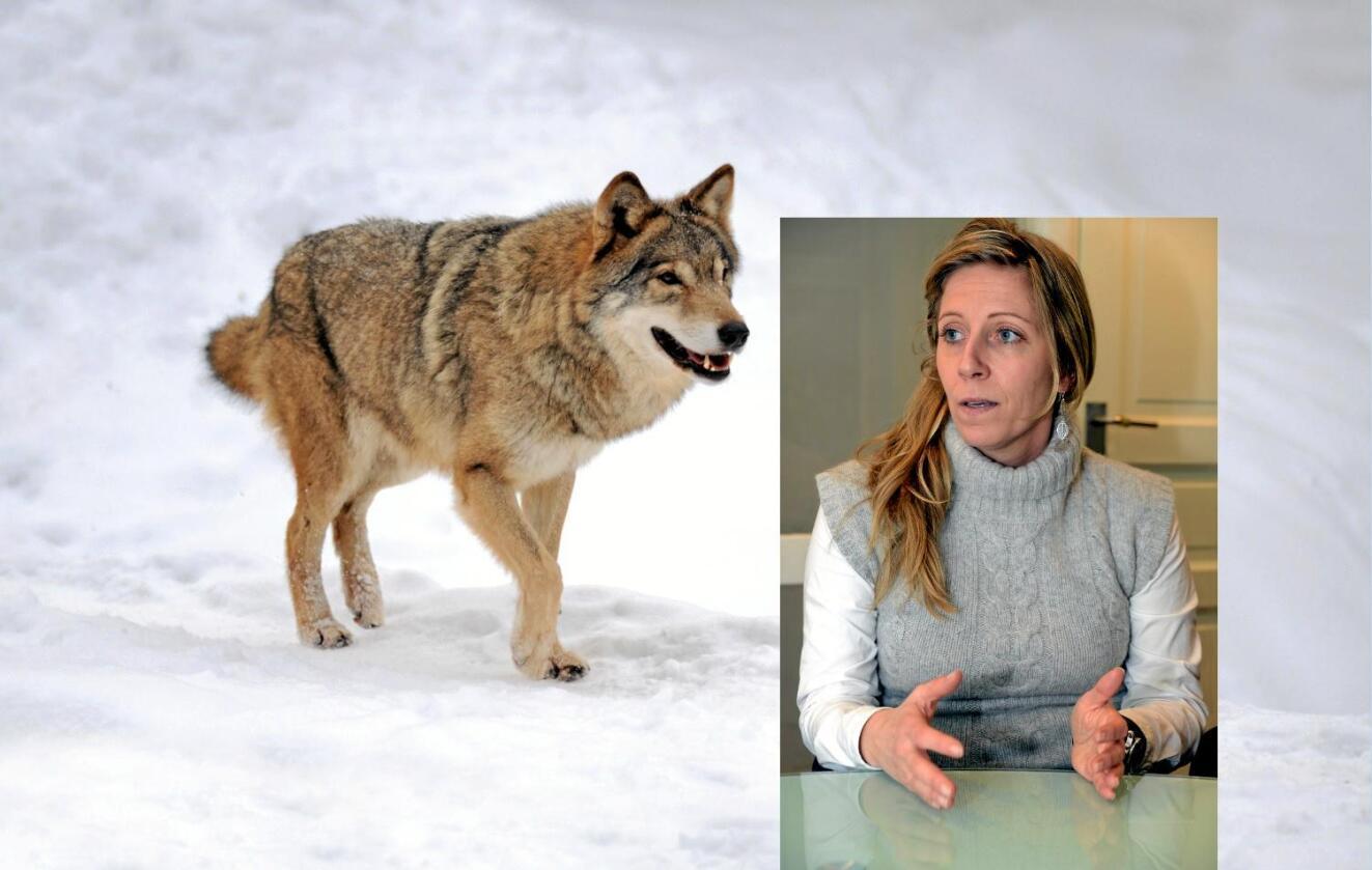 Rystet: Nina Jensen og WWF mener det endelige vedtaket til rovviltnemndene er trist og hårreisende. Colourbox / Siri Juell Rasmussen