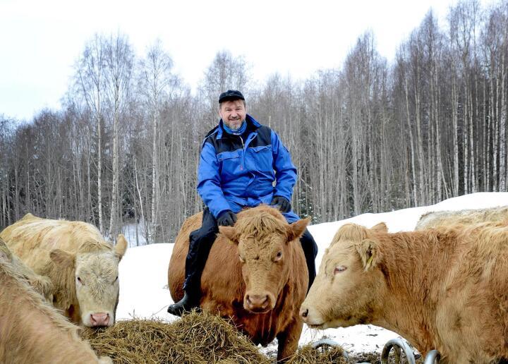 Dyra til Halvor Sveen velger å være ute, god tilgang på fôr gjør at de trives selv i store snømengder. Alle foto: Mariann Tvete