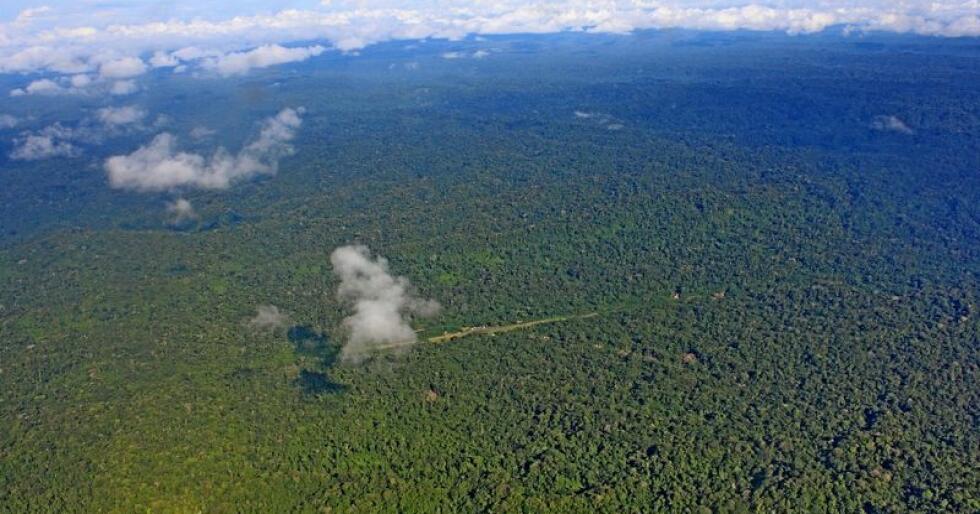 Green Resources, som ble etablert i 1995, står bak en av de største norske investeringene i Afrika. Illustrasjonsfoto: Colourbox