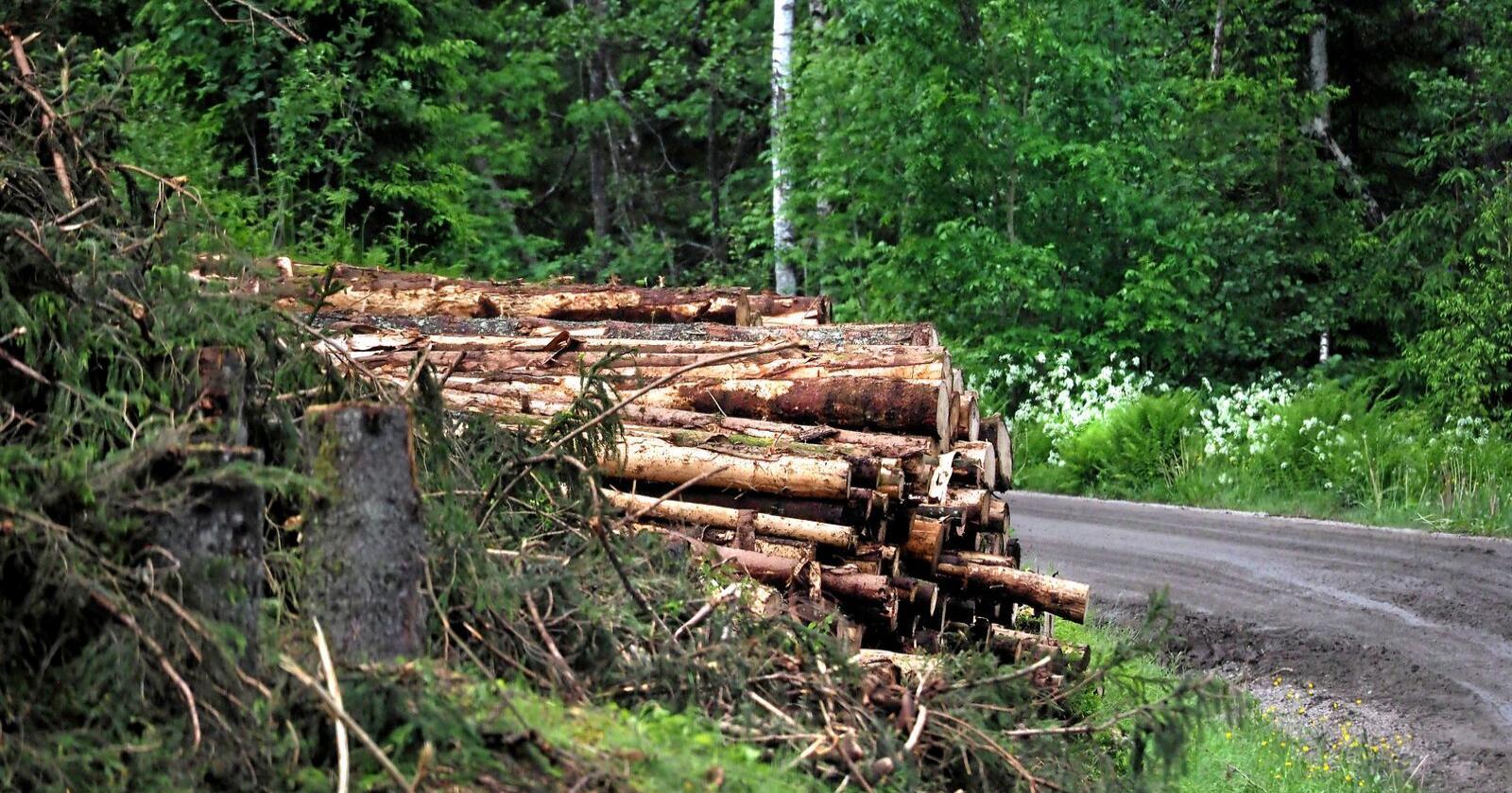 Skogbruket ønsker seg en tiltakspakke på 60 millioner kroner, og mener at det kan bli 14 millioner kroner billigere enn permitteringer i bransjen. Foto: Siri Juell Rasmussen