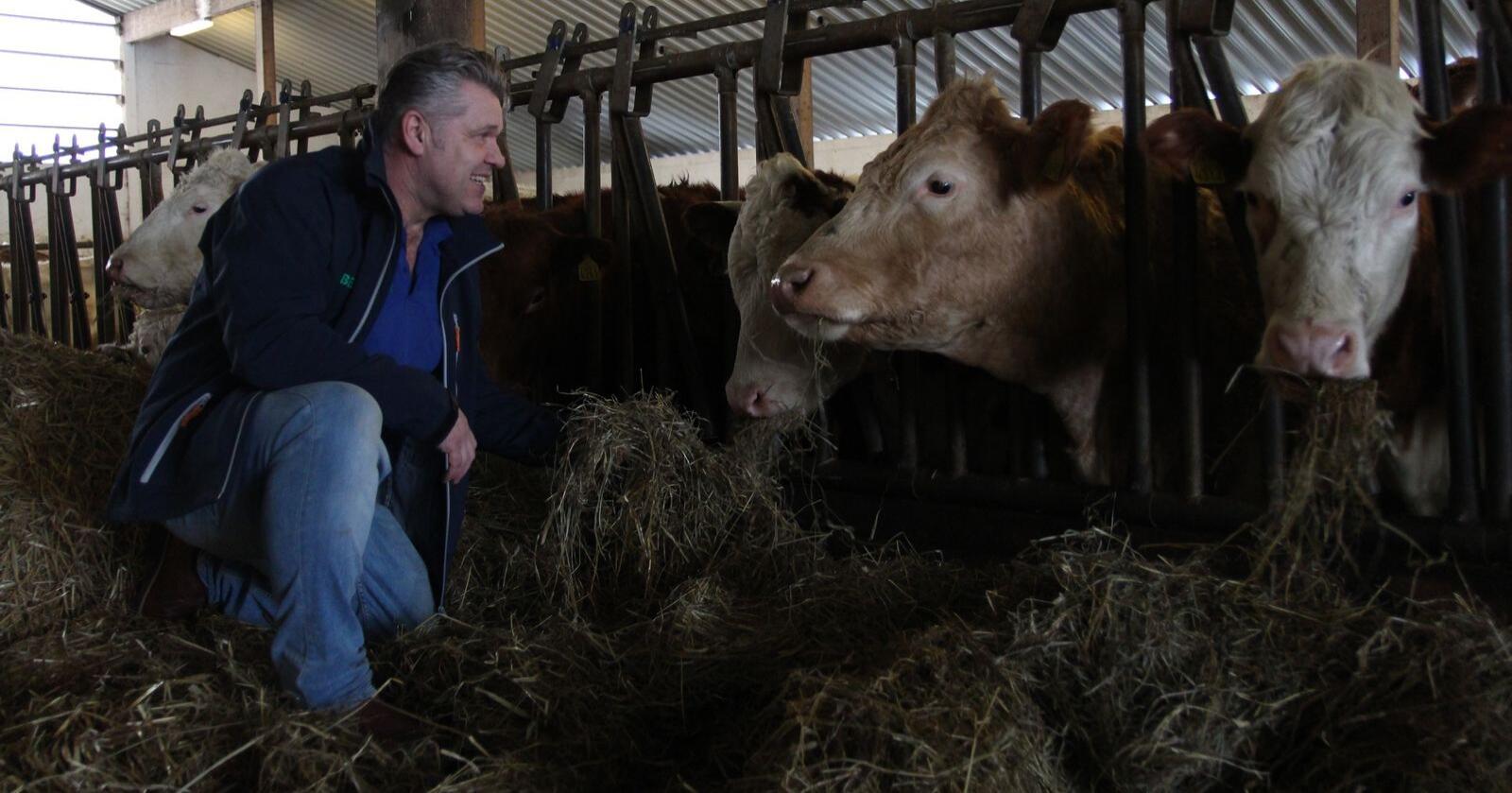 For produsenter av storfekjøtt er det ikke navnet på tilskuddet som betyr noe. Det er tallet, om lag 250 millioner kroner, som er avgjørende, skriver Erling Gresseth i Tyr. (Foto: Kristin Bergo)