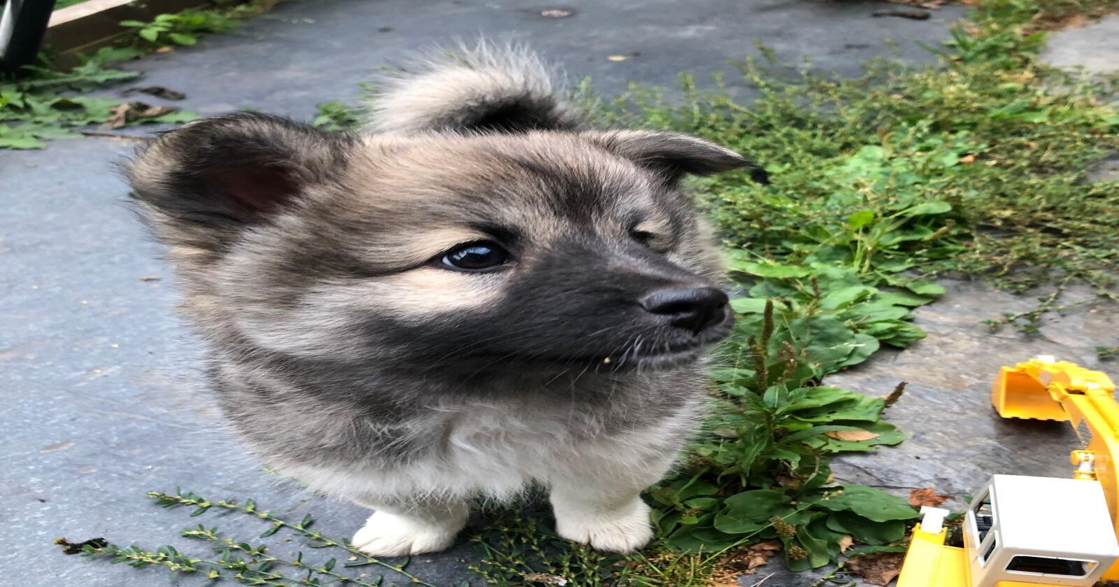 SNIKSKRYT: Også som hundeeier mener undertegnede at du unner bikkja å vite hvilke behov den har, slik at dere kan få det fint sammen. Og, er ikke denna søt? Foto: Marit Glærum.
