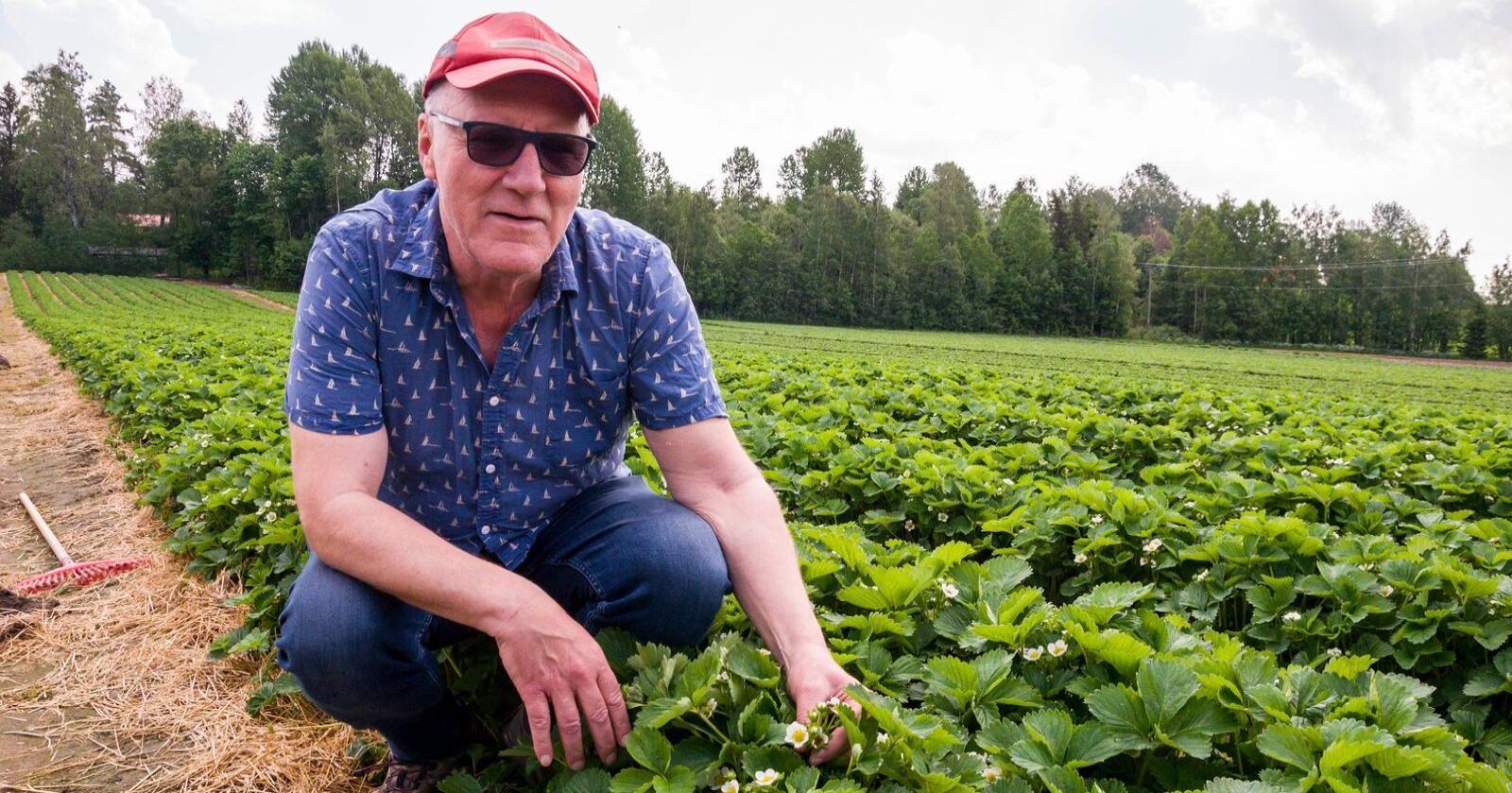 Thorer Egeland er jordbærbonde i Spydeberg. Foto: Smaalenenes Avis