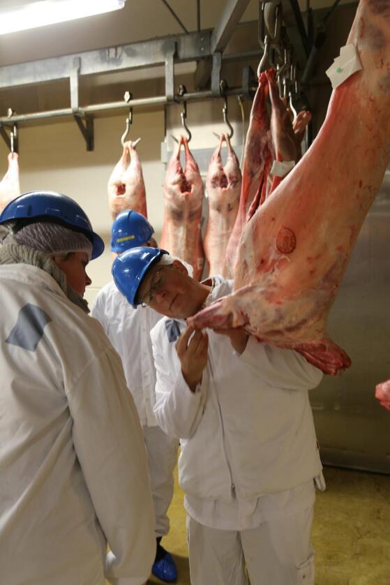 Halvor Mikalsen er klassifiseringskonsulent i Animalia. Her lærer han opp klassifisører i å klassifisere lammeslakt. Foto: Animalia