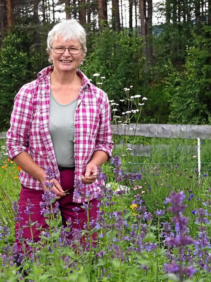 Gunhild Skattebu driver selskapet Fjellurt. De driver fram utplantingsplanter fra frø og stiklinger, planter ut, steller og høster planter med håndkraft. Foto: Siri Juell Rasmussen